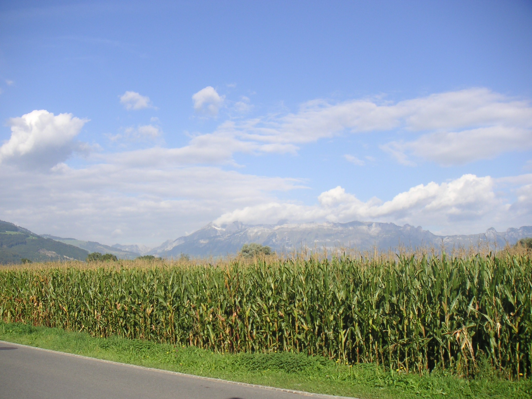 Corn Milling