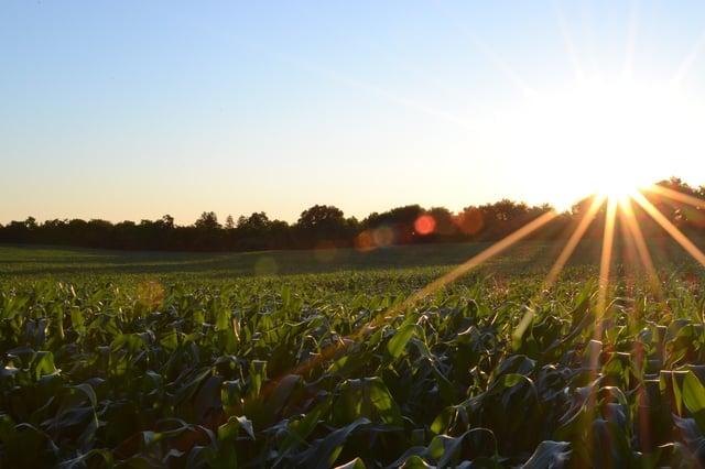 corn-691634_1280.jpg